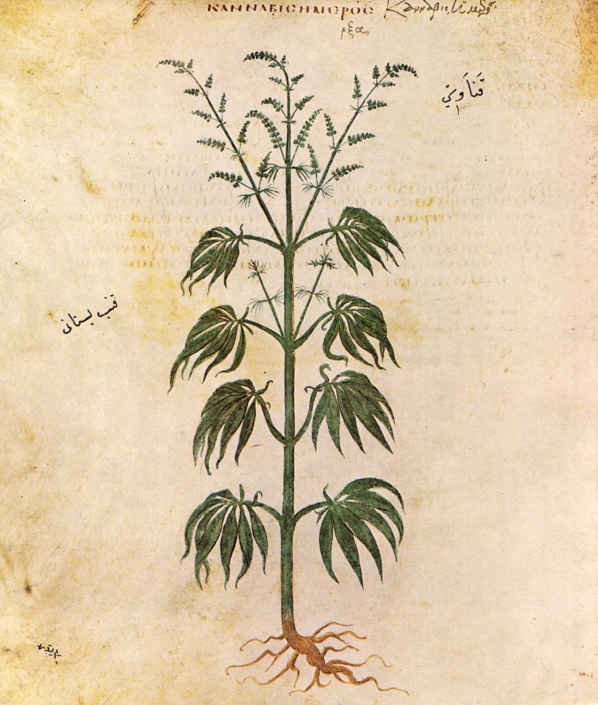 1st Botanical Drawing wikimedia.org