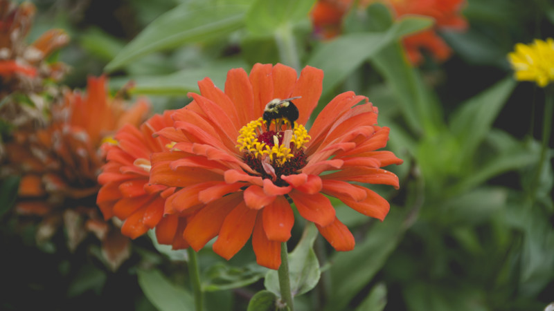 A Home Gardener's Guide To Safe, Bee-Friendly Pesticides