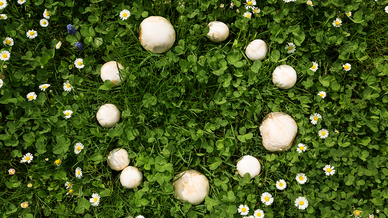 The Myth and Lore of The Fairy Ring - Garden Collage Magazine